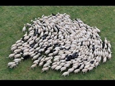 Le Bon 03 Sheeple